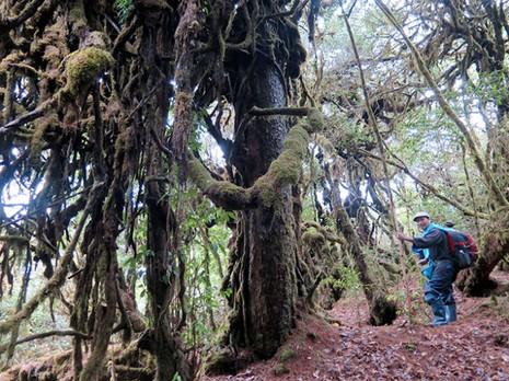 Khu rừng thuốc quý trên cao - ảnh 2