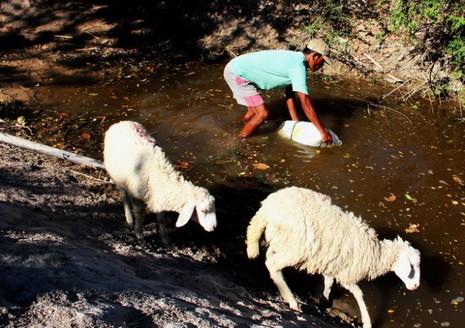 Những vũng nước cứu làng - ảnh 2