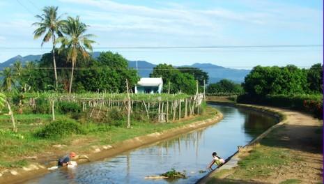Chòm rẫy xanh mướt ở làng Bàu Trúc, bên dòng mương Nhật dẫn nước từ đập Nha Trinh chảy về - Ảnh: Viễn Sự