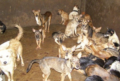 Phạt gần 5 triệu đồng vì chở chó không kiểm dịch - ảnh 1