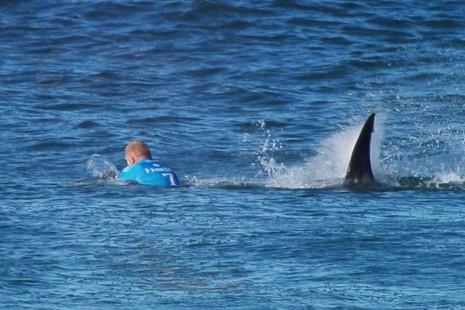 Tin thêm về nhà vô địch lướt sóng chiến đấu với cá mập - ảnh 1