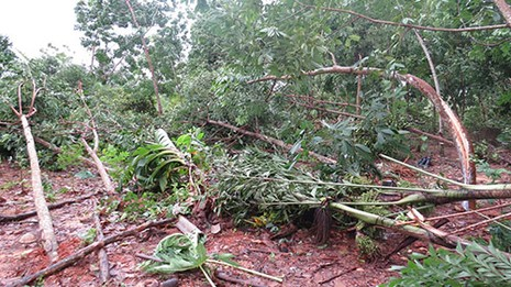 Quảng Bình: Lốc xoáy làm 54 ngôi nhà bị tốc mái - ảnh 2