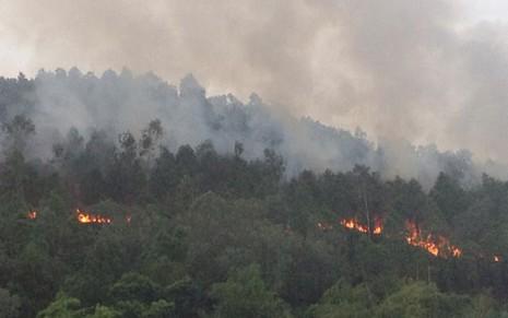 Rừng thông vẫn đang cháy dữ dội ở Nghệ An - ảnh 2