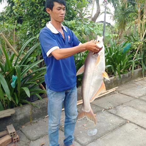 Bắt được cá basa 'khủng' 9 kg trên sông Đồng Nai - ảnh 2