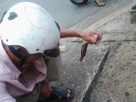 Độc đáo nghề câu cá trê ngay giữa đường phố - ảnh 4