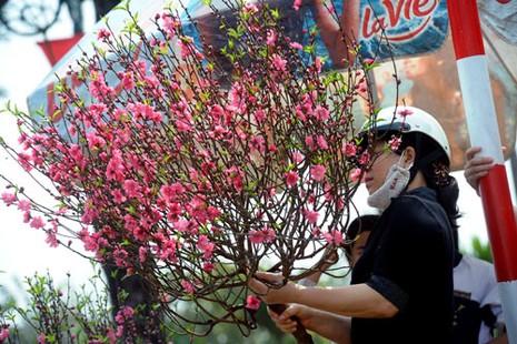 Một người chơi đào sành sỏi,ngoài việc hiểu kỹ thuật trồng cây còn phải biết cách giữ cho hoa tươi lâu