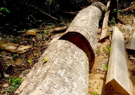 Khởi tố phó giám đốc BQL bảo vệ rừng phòng hộ - ảnh 1