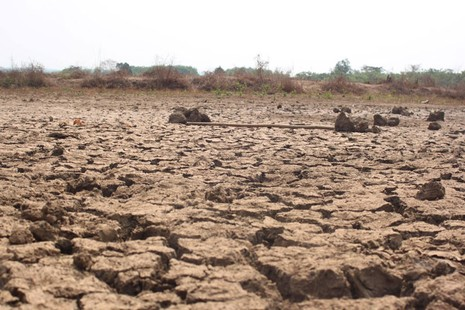 Bình Phước thiệt hại hơn 670 tỉ đồng do khô hạn kéo dài - ảnh 1