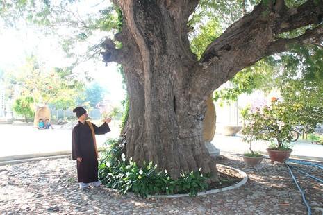 Một làng có 3 cụ cây gần 300 năm tuổi - ảnh 3