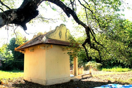 Một làng có 3 cụ cây gần 300 năm tuổi - ảnh 6