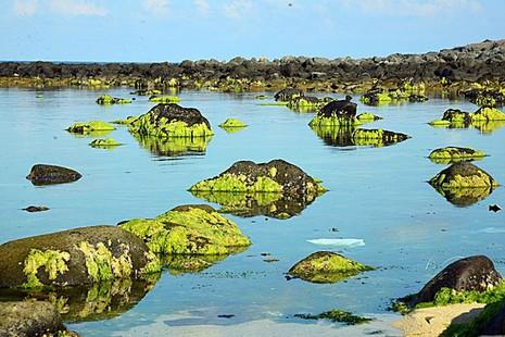 Nghi tảo độc là tác nhân gây cá chết ở đảo Phú Quý - ảnh 1