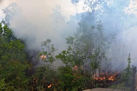 Chưa rõ nguyên nhân cháy rừng dữ dội ở dự án FLC Hạ Long - ảnh 1