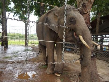 Lắp hơn 1 km hàng rào điện bảo vệ voi - ảnh 1