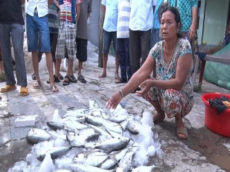 Huế: Dân điêu đứng vì cá lồng chết bất thường - ảnh 2