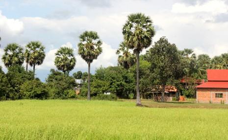 Ngỡ ngàng một Campuchia tươi đẹp - ảnh 7
