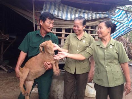 Mô hình các cựu chiến binh giúp nhau giảm nghèo tại xã Tân Xuân, huyện Ba Tri, Bến Tre.