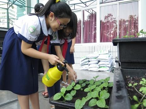 Thêm một trường học làm vườn rau sạch cho học sinh  - ảnh 8