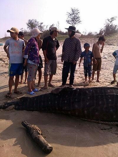 Cá voi 'Ông Thông' nặng gần 4 tấn trôi dạt vào Mũi Né - ảnh 1