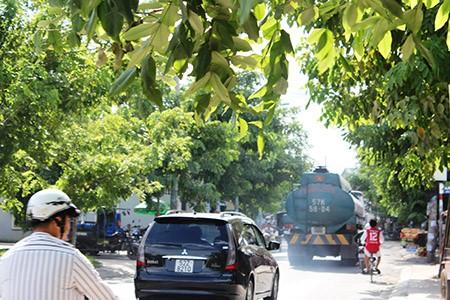 Xe ben, xe bồn, container ngang nhiên đi vào đường cấm - ảnh 10