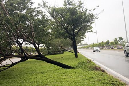 Nhiều cây xanh bật gốc vì mưa lốc - ảnh 2