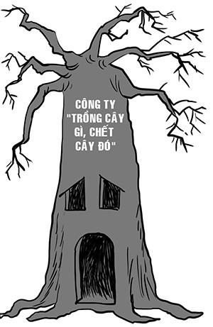 Trồng cây gì chết cây đó - ảnh 1