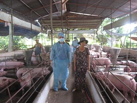 Sẽ đóng cửa cơ sở chăn nuôi dùng chất cấm - ảnh 2