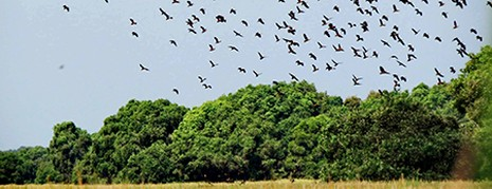 Đồng Tháp cảnh báo nguy cơ cháy rừng cấp cực kỳ nguy hiểm - ảnh 1