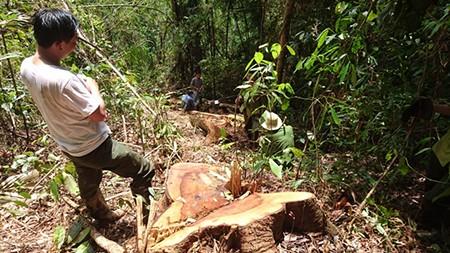 Khởi tố vụ án phá rừng tại hồ thủy điện Đồng Nai 5 - ảnh 1