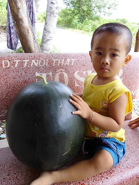 Xem dưa hấu 'khủng' cân nặng 17 kg - ảnh 3