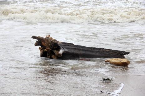 Bãi biển Nha Trang ngập rác trong những ngày mưa - ảnh 4
