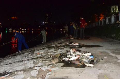 Hà Nội vớt nhiều tấn cá chết trong đêm - ảnh 5