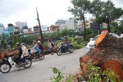 Người Hà Nội vẫn chưa hết bàng hoàng sau cơn bão - ảnh 1