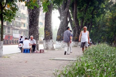 Tiếc nuối khi hàng cây Kim Mã phải di chuyển - ảnh 3