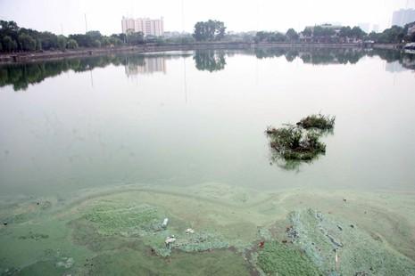 Hồ nước bốc mùi hôi thối, người dân 'cố thủ' trong nhà - ảnh 2
