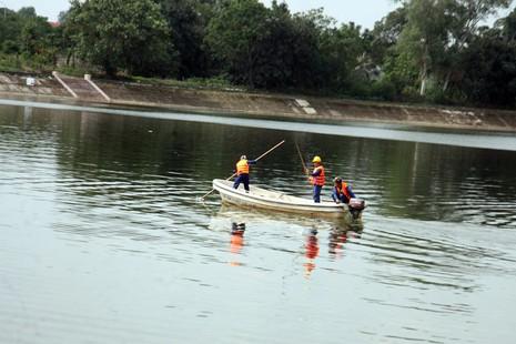 Cá lại chết nhiều ở hồ Linh Đàm - ảnh 8