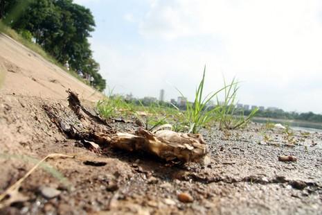 Cá lại chết nhiều ở hồ Linh Đàm - ảnh 10