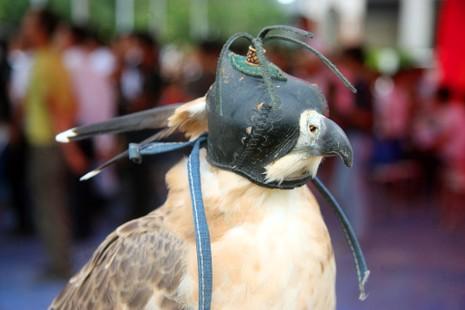 Hào hứng với hội thi chim ở Hà Nội - ảnh 9