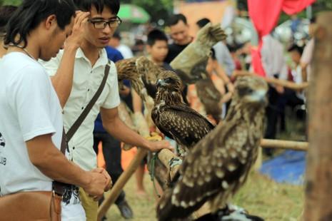 Hào hứng với hội thi chim ở Hà Nội - ảnh 1