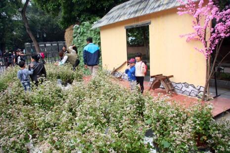 Thiếu nữ Hà thành tạo dáng bên vườn hoa tam giác mạch - ảnh 4