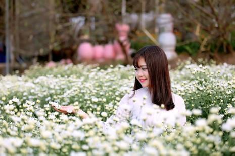 Thiếu nữ Hà thành 'đọ sắc' cùng hoa cúc họa mi - ảnh 12