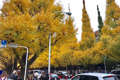 Đẹp mê say với mùa lá vàng ở Nhật Bản - ảnh 4