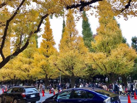 Đẹp mê say với mùa lá vàng ở Nhật Bản - ảnh 7