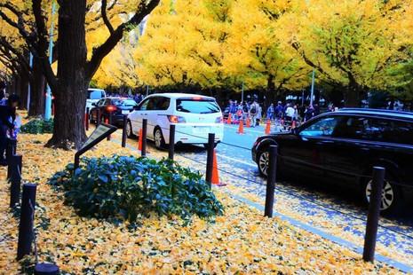 Đẹp mê say với mùa lá vàng ở Nhật Bản - ảnh 8