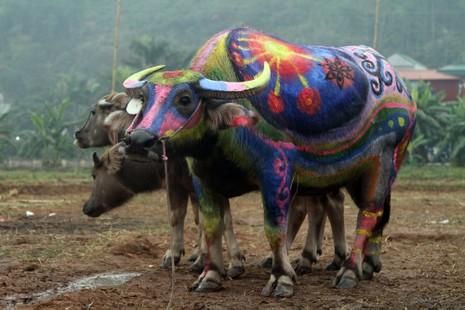Hình ảnh trâu 'cõng' gà trống trong lễ hội Tịch Điền - ảnh 2