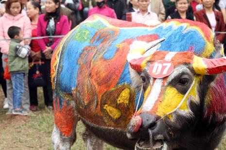 Hình ảnh trâu 'cõng' gà trống trong lễ hội Tịch Điền - ảnh 4