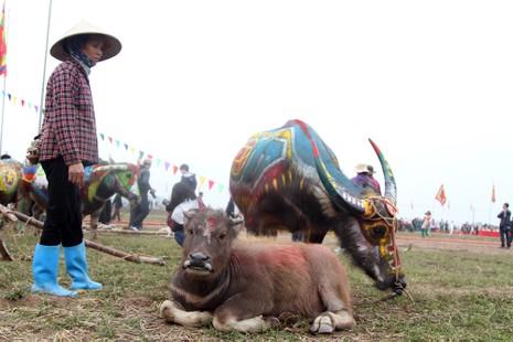 Hình ảnh trâu 'cõng' gà trống trong lễ hội Tịch Điền - ảnh 6