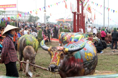 Hình ảnh trâu 'cõng' gà trống trong lễ hội Tịch Điền - ảnh 1