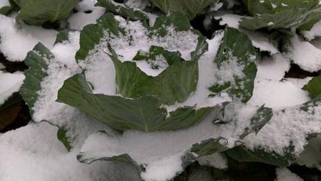 Mưa tuyết, băng giá còn tiếp diễn tại nhiều tỉnh miền Bắc - ảnh 2