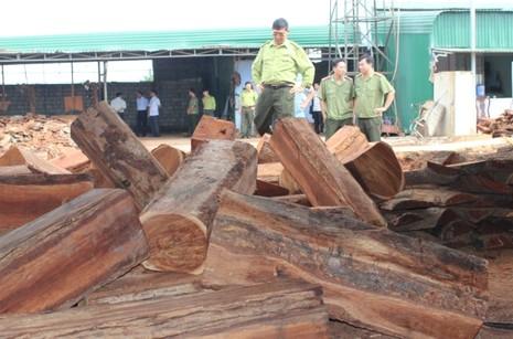 Bắt hơn chục khối gỗ lậu của một doanh nghiệp - ảnh 2