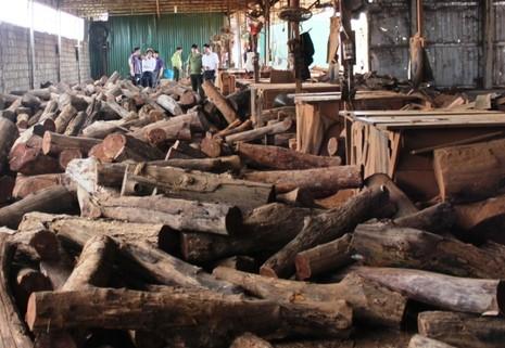Bắt hơn chục khối gỗ lậu của một doanh nghiệp - ảnh 1